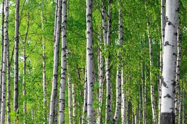 Краснообский лес