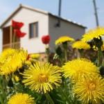 Заботы садоводов НСТ «Обские зори»