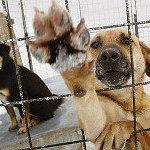 Итоги Акции «Помоги бездомным животным»-2014