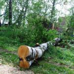 «Бавария» приступила к вырубке деревьев