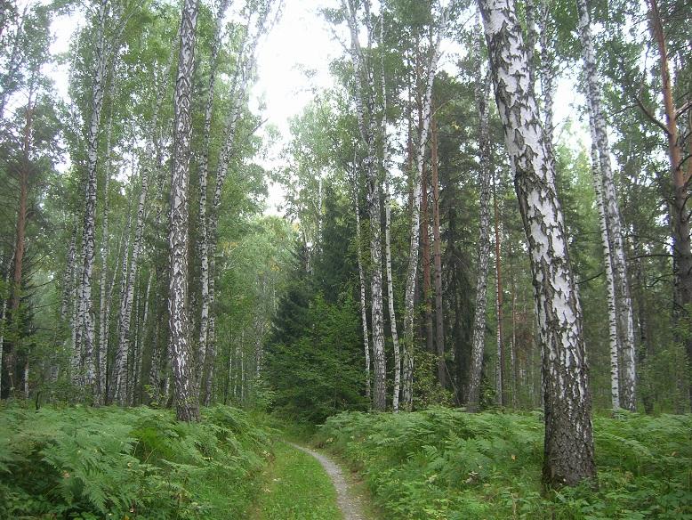 Леса в Академгородке, Новосибирск